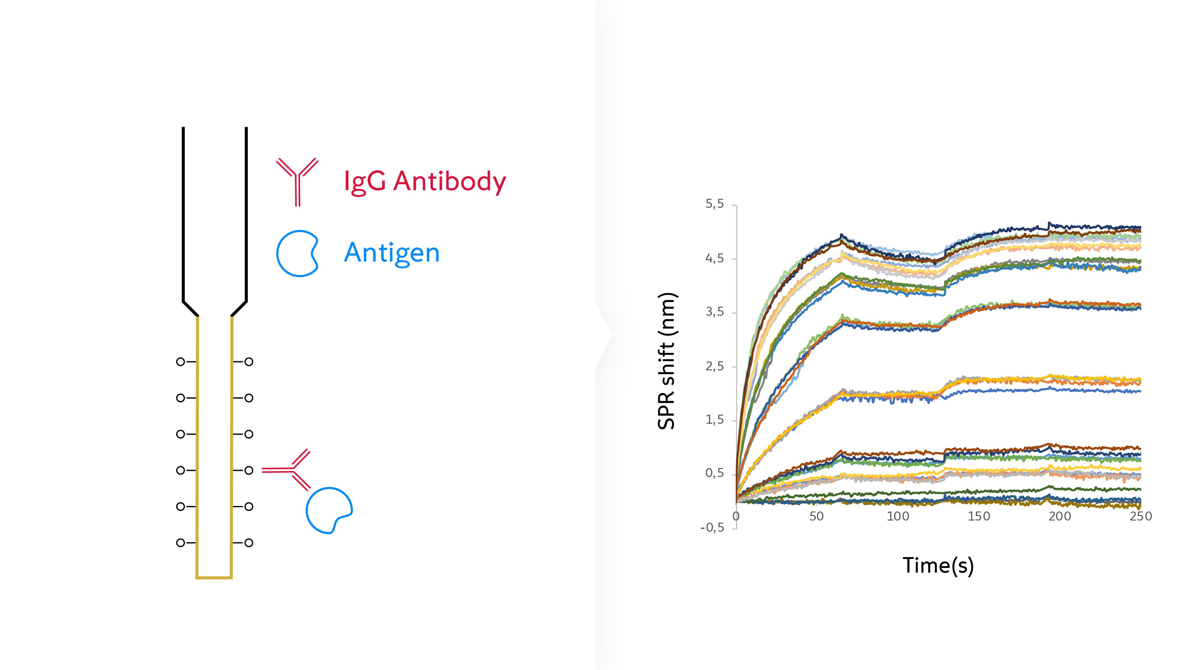 Antibody potency screening via surface plasmon resonance infographic